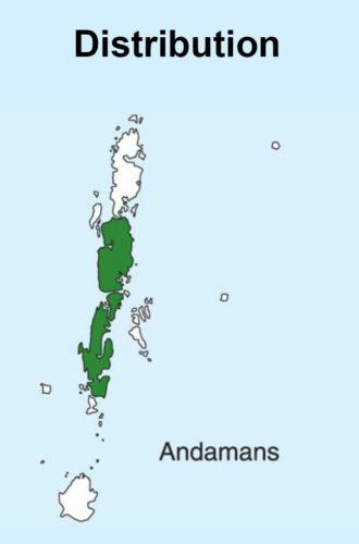 Andaman Bulbul map