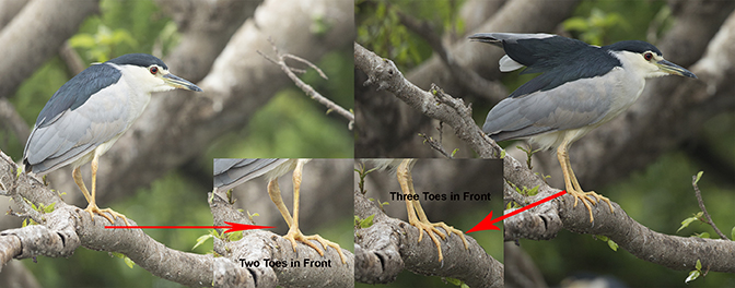 Foot Structures Of Birds